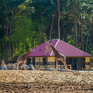 Safari lodge beekse bergen